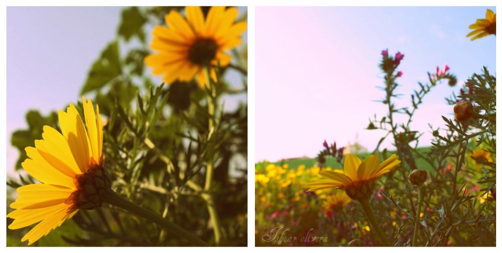 Collage de Picnik01